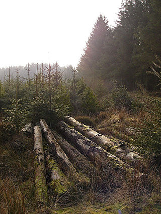Cut_timber_-_geograph.org.uk_-_694844