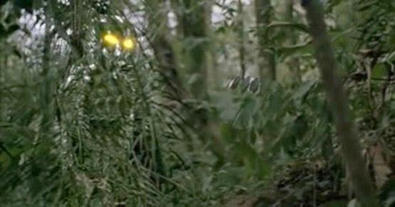 predator-camo2