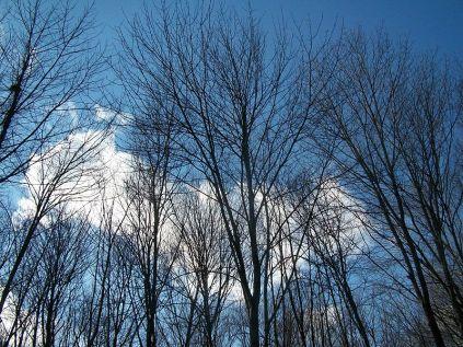 800px-Winter_Sky_New_Jersey