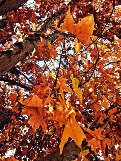 Orange_in_Middletown