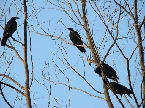 800px-Birds_Bangladesh_2_(2)
