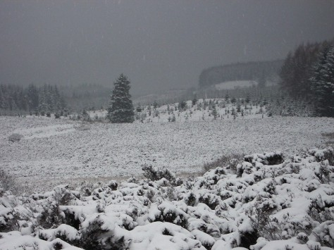Snow_at_forest_edge_-_geograph.org.uk_-_135567