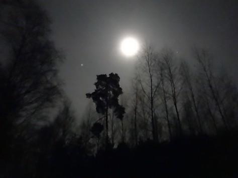 PuszczaBydgoska_night4_01-2015