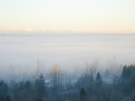 December_Fog_01