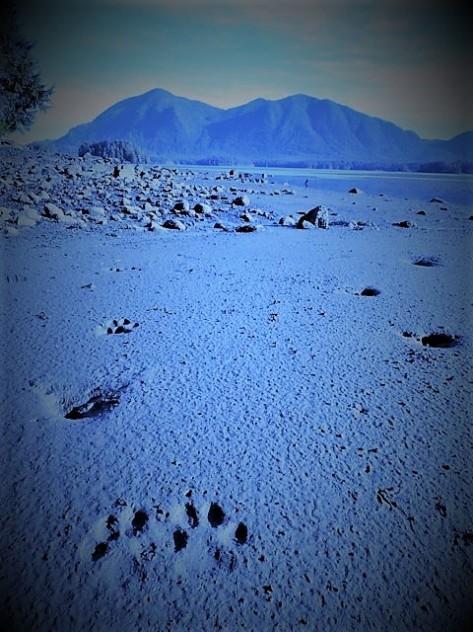 Wolf_Prints_Mudflatse