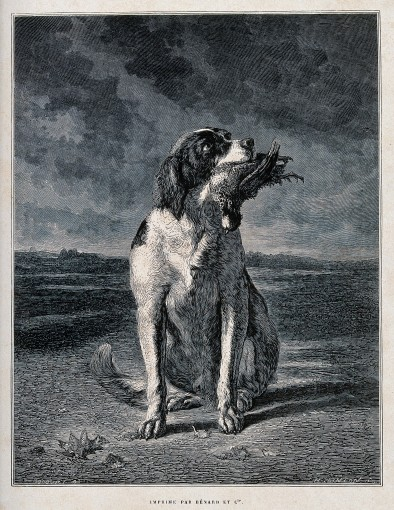 V0021840 A hunting dog sitting with a game bird in its mouth. Wood en