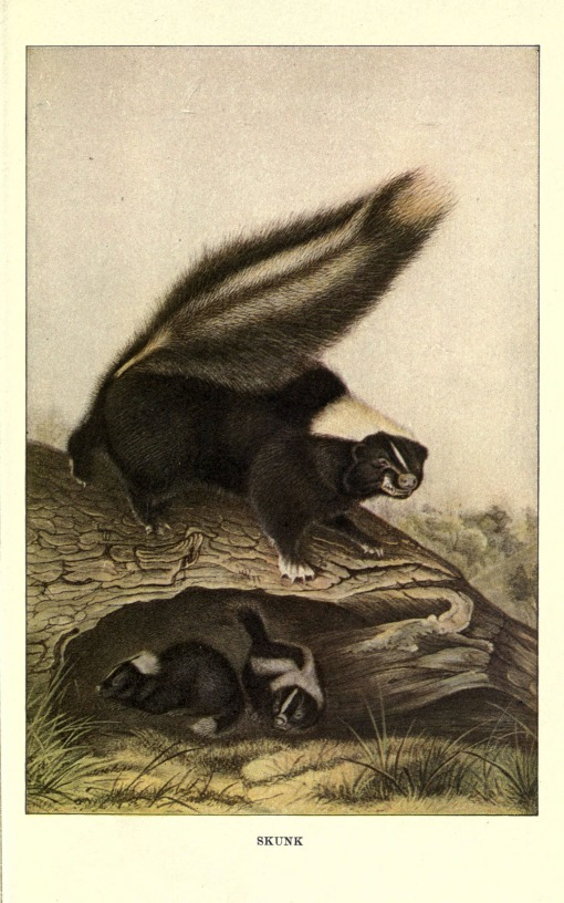 Squirrels_and_other_fur-bearers_(Plate_8)_(6286178936)